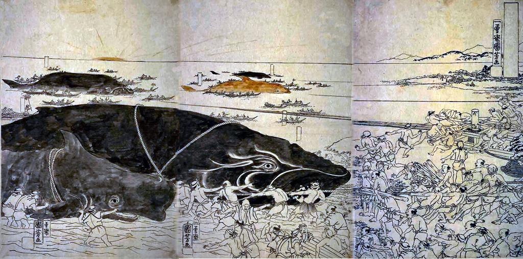 Resultado de imagem para whale old print