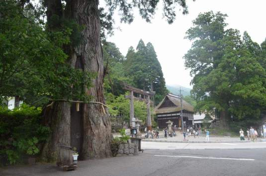 Three Cedars of Togakushi